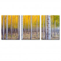 Amosi Art-3 Pcs Wall art Birch Forest Canvas Pinted For Living Room, Home Decoration