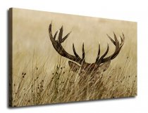 Canvas Wall Art Deer Antler in Grass  Canvas Artwork for Home Decoration Framed Ready to Hang