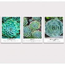 Succulent Plant Wall Art Picture Canvas Prints Simple Life Painting Modern Artwork for Home Kitchen Decor