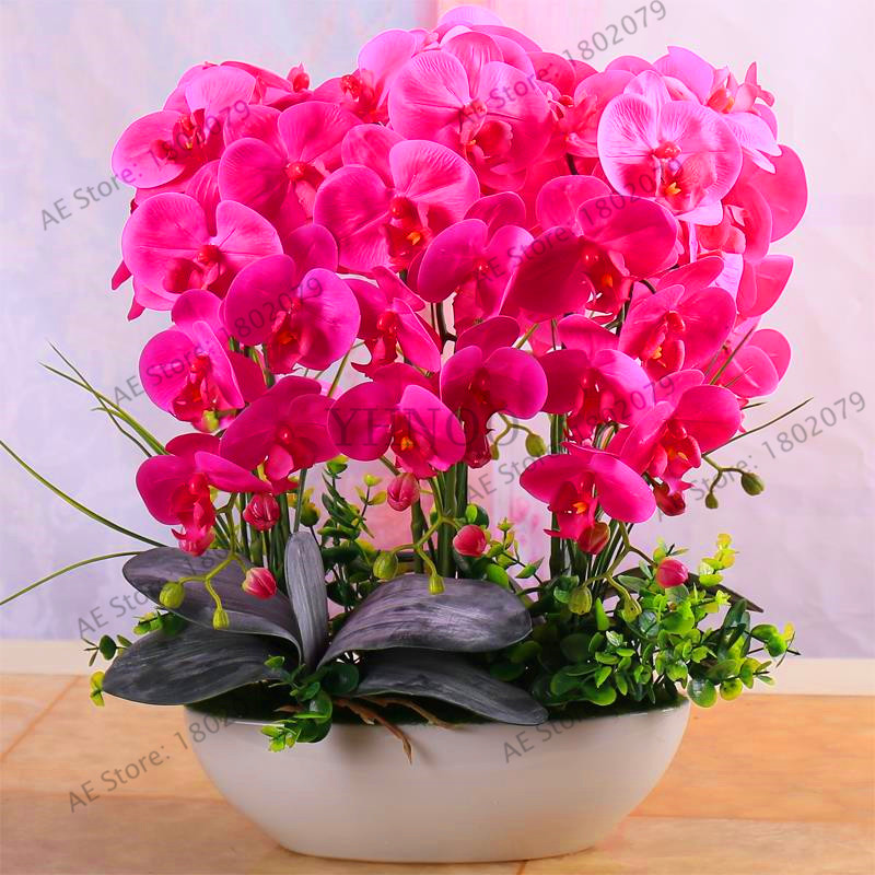 SODIAL 20PCS orchid seed Bonsai Flower seeds for home garden Red