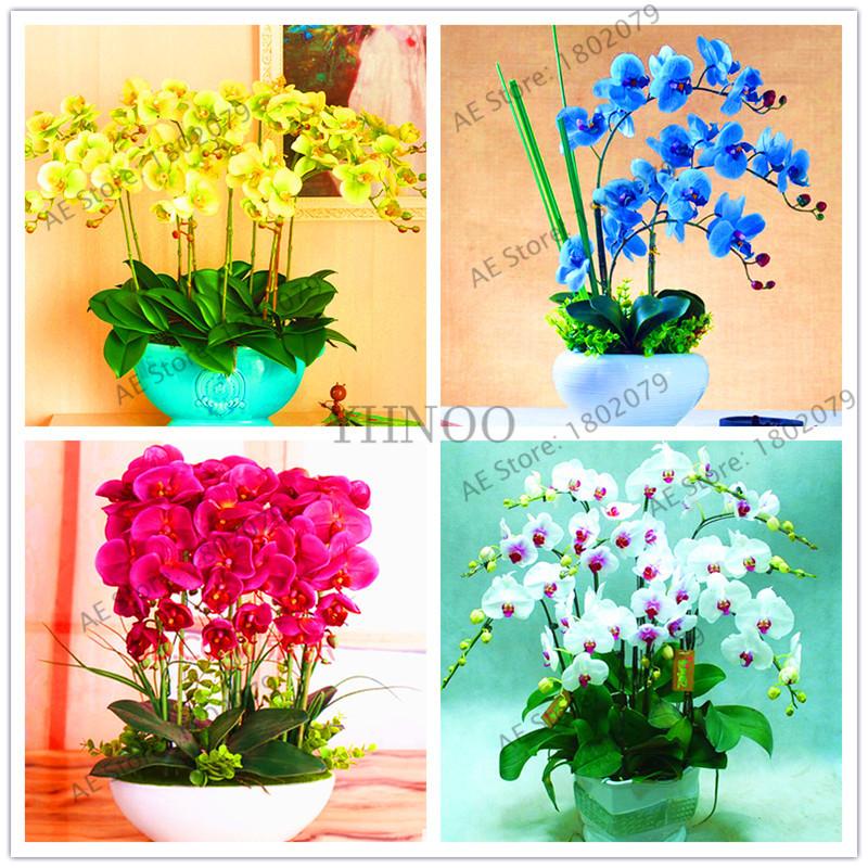 100 Pcs Mix Color Phalaenopsis Flower Seeds Bonsai Plant Butterfly Orchid Garden