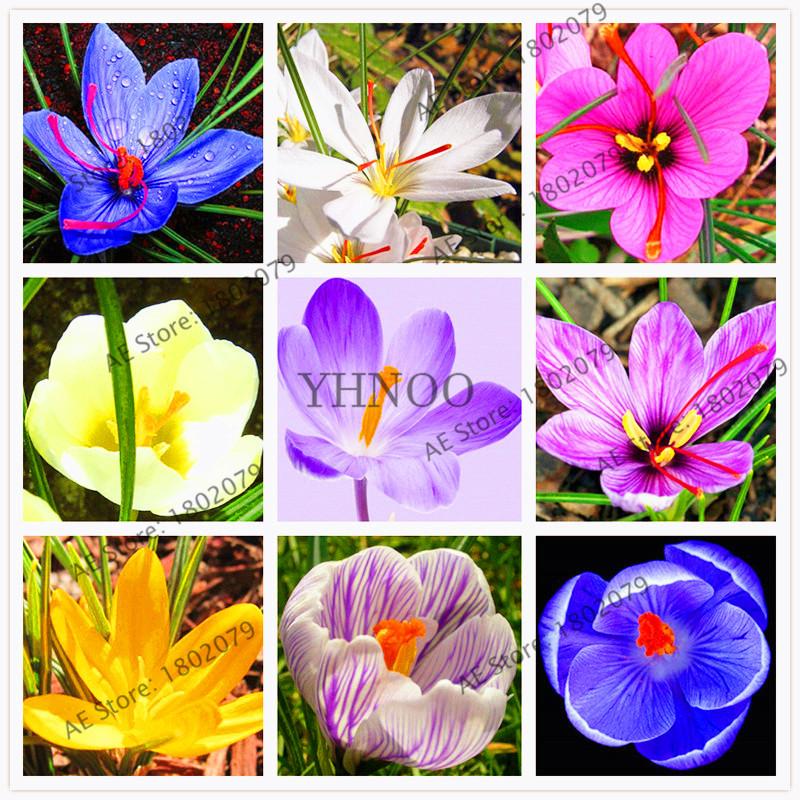 Us 0 8 103pcs Hot Sale Many Varieties Saffron Seeds Saffron
