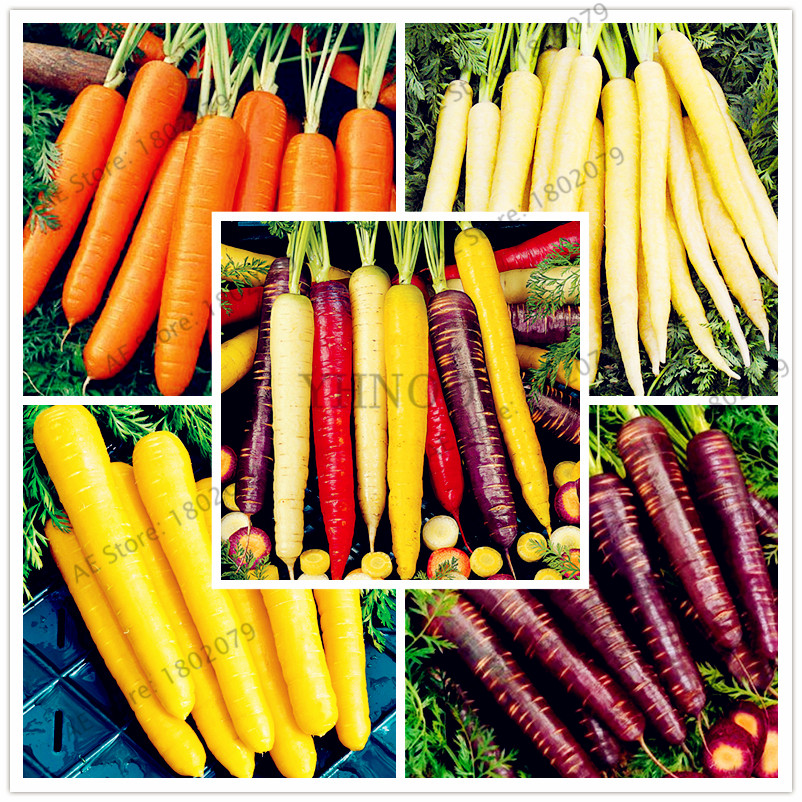 100pcs Bag Carrot Seeds Fruit Vegetable Seeds Nutrition Organic Healthy Food For Home Garden Planting Easy To Plant