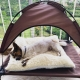 XLarge Elevated Dog Cot with Canopy Shade 1680D Oxford Fabric Outdoor Pet Cat Cooling Bed Tent w/Convenient Carrying Bag Indoor Sturdy Steel Frame Portable for Camping Beach
