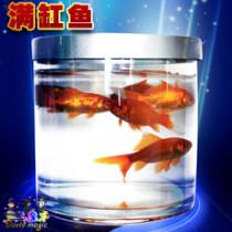 Fishtastic