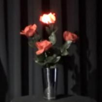 Light Roses Set - Remote Control