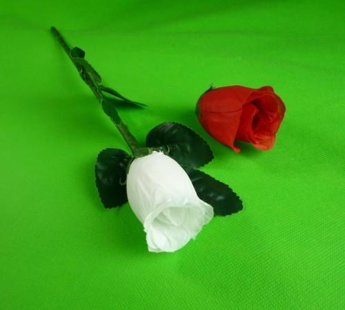 Rose Regeneration
