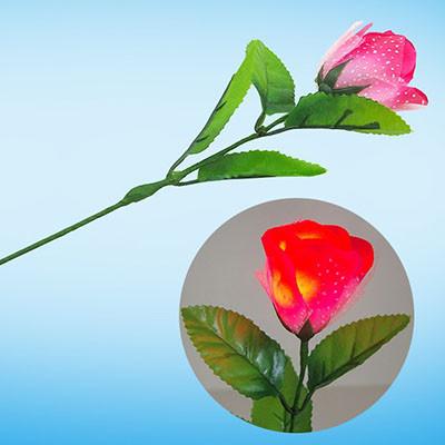 Light Rose