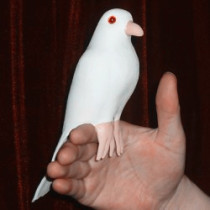 Dynamic Latex Dove