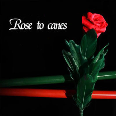 Rose to Canes