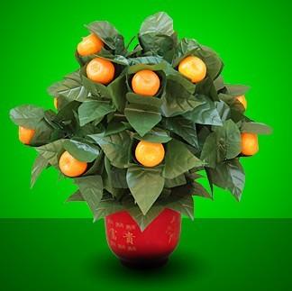The Orange Tree Illusion (15 Oranges)