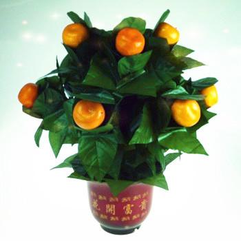 The Orange Tree Illusion (10 Oranges)