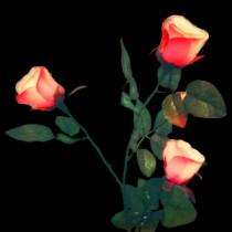 Super Light Rose Queen (Charging Version)