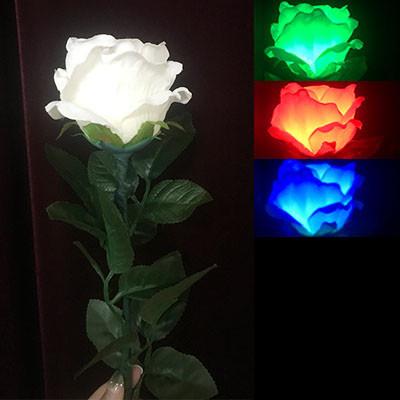 Three-Color Light Rose