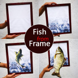 Fish from Frame