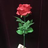 Light Rose - Remote Control