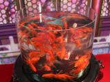 Deluxe Fish Tank