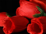 The Rose 2.0 by Bond Lee & Wenzi Magic