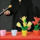 * Appearing Flowers in Four Vases