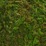 decorative moss green