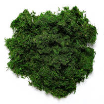 Preserved Forest Moss, Fresh Green, 8oz (200 cubic inch)