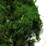 moss sheets, moss for terrarium, moss gardening, moss aquarium