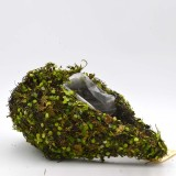 moss for succulents                                             and