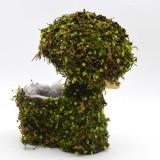 green moss balls                                             super