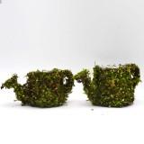 Sprinkling can moss planter