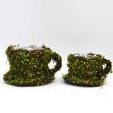 roll of moss                                             greens    teacup planter moss