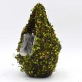 forest moss                                             vivarium