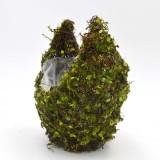 moss for plants                                             pots