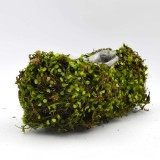 planting moss                                             with