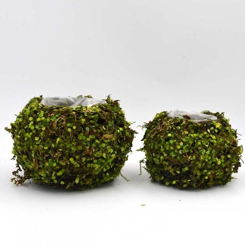 Small Garden Pot, Natural Green Succulent Planter for Spring Decor