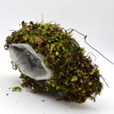 Succulents Pot, Moss Covered Basket for Garden Home Decor