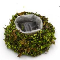 Rustic Twig Green Moss Planter Box, Round Shape for Farmhouse Decor