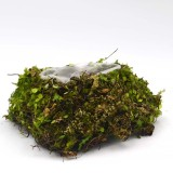 Rustic Heart Moss Green Wedding Planter, Moss Basket for Floral Arrangement
