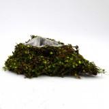 Woodland Natural Twig Green Heart Fake Moss Planter Box