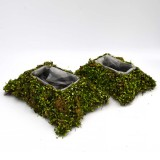 dry moss                                             in