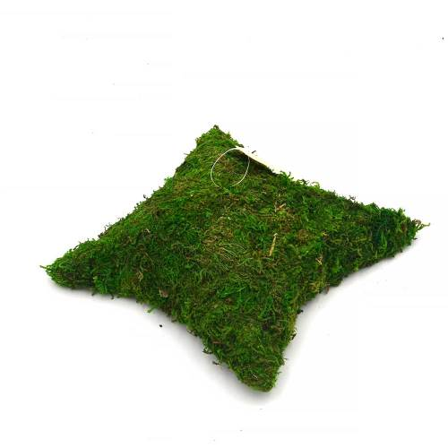 Decorative Pillow Shaped Green Moss for Garden Crafts