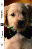 Pet animal series  3D UV back film TL-0000092